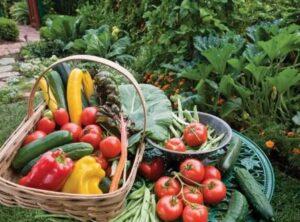 Рекомендации по повышению урожайности овощных культур