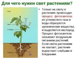 Роль освещенности в жизни растений