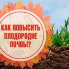 Как улучшить плодородие почвы на огороде
