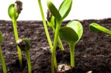 Какие условия роста и развития необходимы растениям