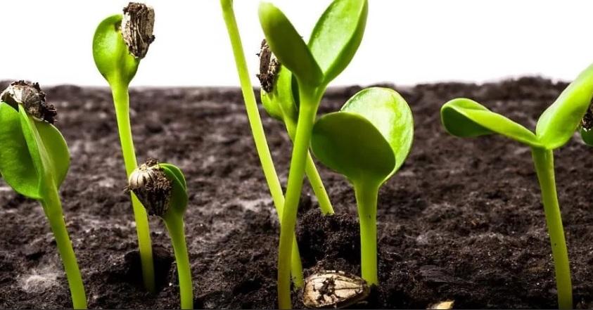 Условия для роста растений