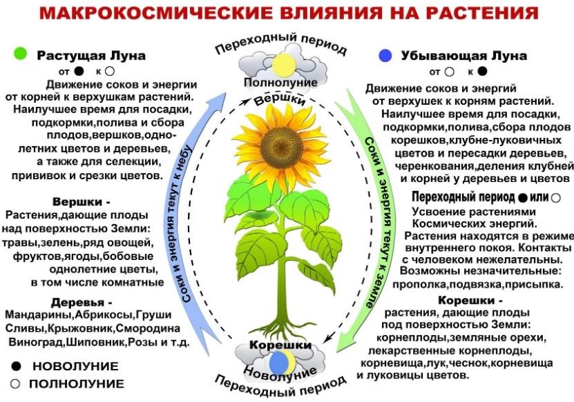 Влияние фаз Луны на растения