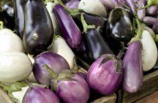 20 сортов баклажанов, которые поражают огородников своей урожайностью
