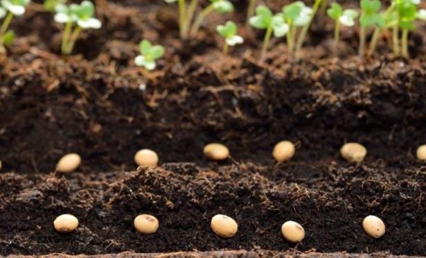 Технология посева семян