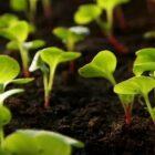 Каких правил нужно придерживаться при посеве семян