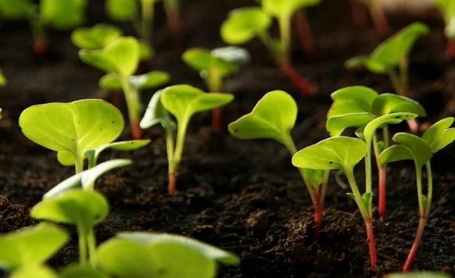 Условия посева семян