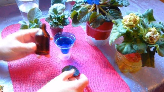 Подготовка емкости для листового черенка