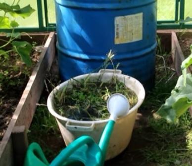 Приготовление настоя травы