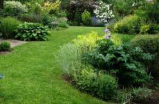 Можно ли уничтожить сорняки на дачном участке раз и навсегда